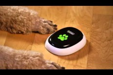 PetChatz Lets Your Pets Video Chat With You