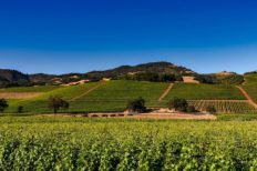Irrigation Robots Could Help California's Wine Problem
